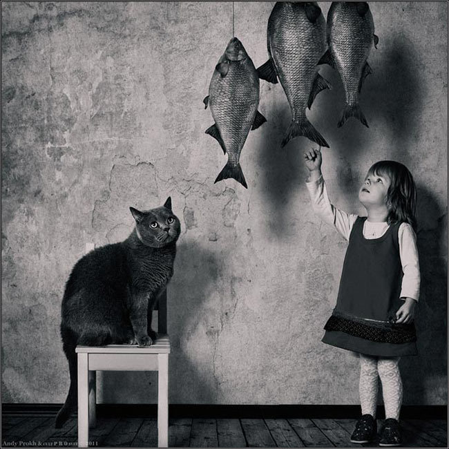 cat, fishes, funny, girl, lol