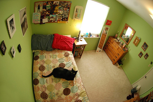 cat, fisheye, pii, room