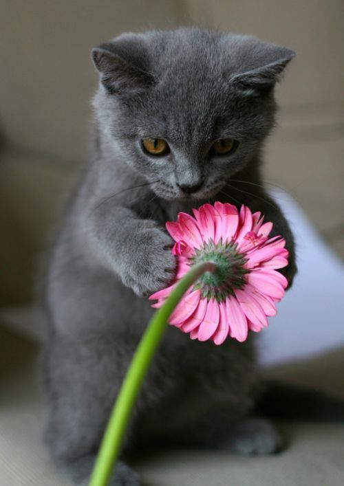 cat, flower, lovely, play