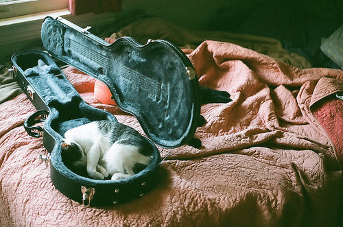 cat, guitar, photography, pretty