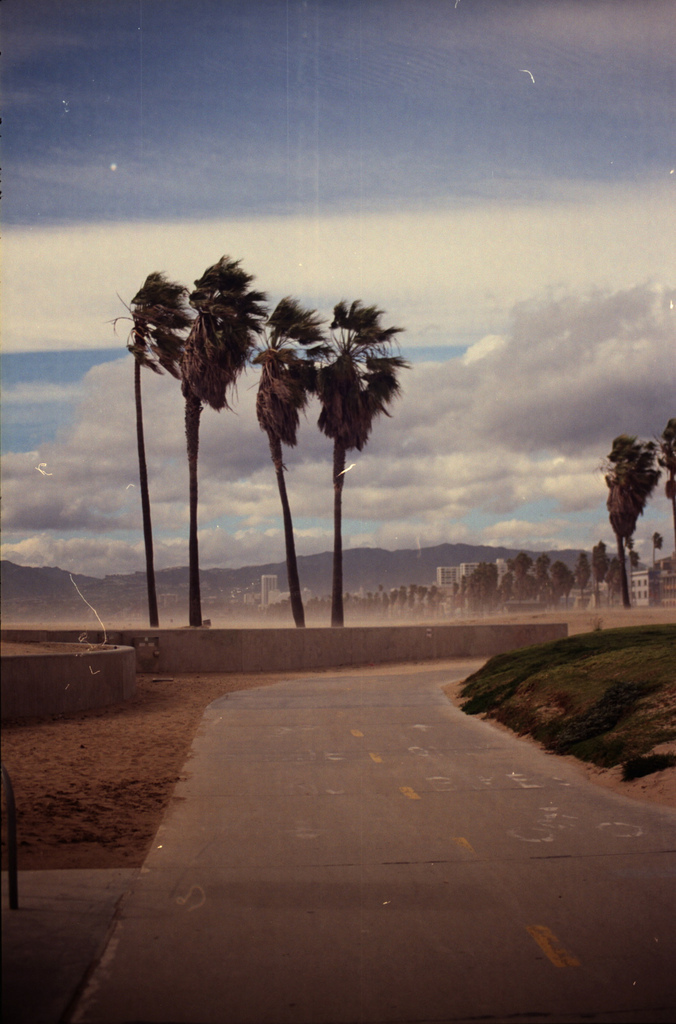 city, highway, palm trees, photography, vintage