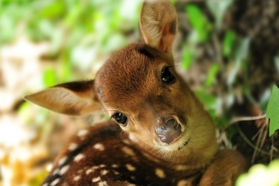 colorful, cute, deer, eyes, glossy