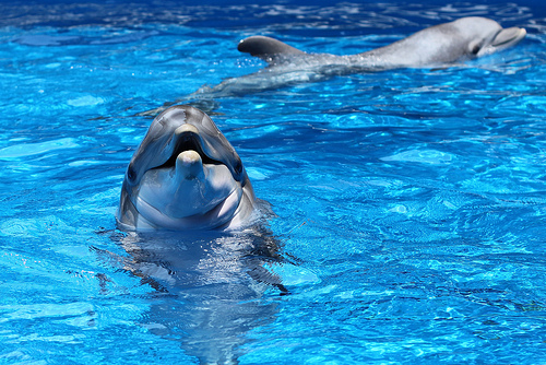 cute, disney, dolphin, photo, photography