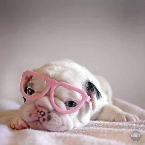 cute, dog, glasses, pink, pretty, sweet