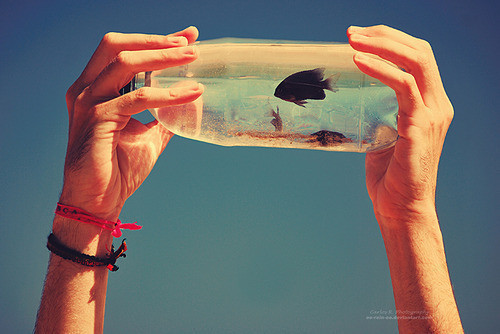 cute, fish, hands, jar, water
