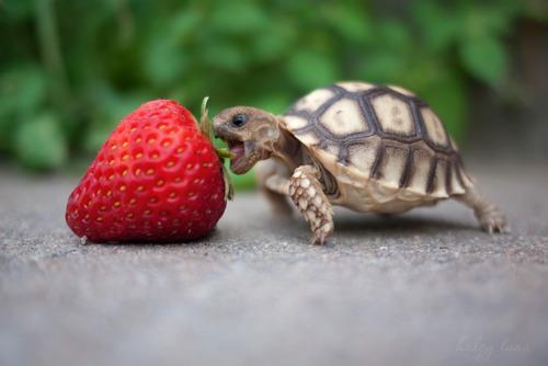 cute, fofo, little, lovely, strawberry