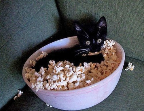 cute, innocent, kitten, lol, popcorn
