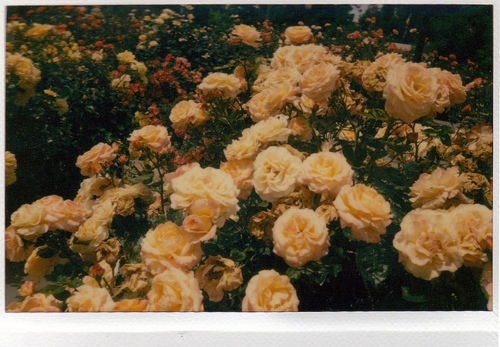 disposable, flowers, green, hipster, orange, photography, vintage