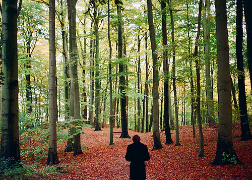 film, forest, green, leaves, nature, photography, red, trees