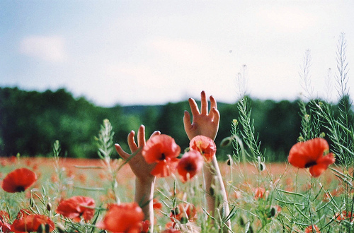 floral, flower, girl, hand, hands, landscape, nature, photography, poppy, poppys