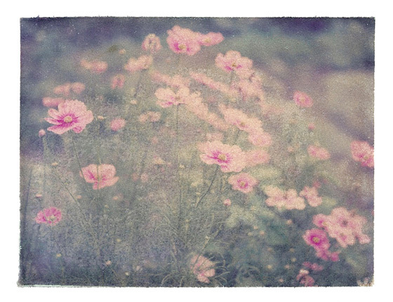 flowers, hitpause, pink