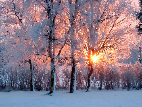 light, snow, sun, sunlight, trees