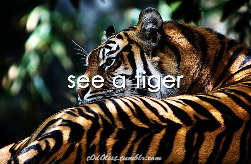 see, text, tiger, to do list, typography