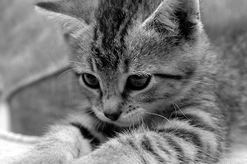 adorable, animal, baby, black and white, cute