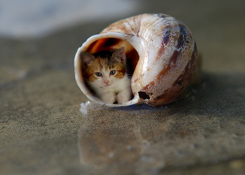 adorable, animal, beach, cat, cosy