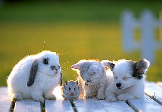 adorable, aww, bunny, cat, cute