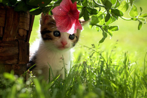 adorable, baby, cat, cute, flower