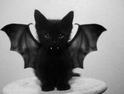 adorable, bat, black kitten, costume, cute, fangs, kitten, vampire cat