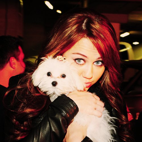 amazing, animal, beautiful, blonde, brunette, celeb, clothes, cute, disney, dog, fashion, girl, hannah montana, heart this, love, miles, miley, miley cyrus, music, pet, pretty, puppy, style, sweet, teenager, viki lovess