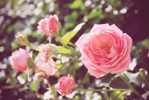 amazing, art, awesome, beautiful, color, colorful, colors, cute, day, green, light, love, lovely, nature, photo, photography, pink, romantic, rose, separated with comma, sun, sweet, yellow