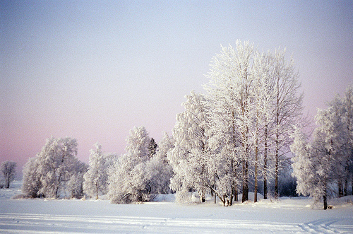 amazing, beautiful, blue, gorgeous, nature, photography, season, sky, snow, snowing, tree, trees, violet, white, winter