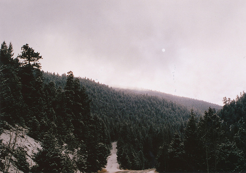 analog, beautiful, cute, forest, grain