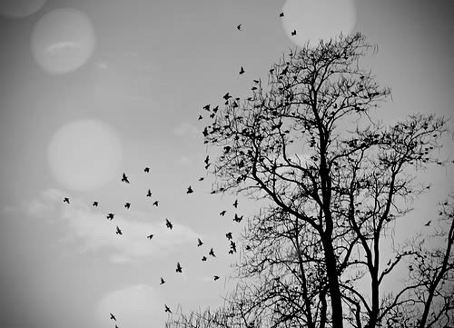 animal, b&w, beautiful, bird, birds, black & white, black and white, cute, landscape, light, lights, nature, photo, photography, sky
