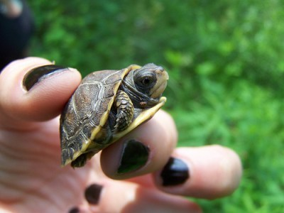 animal, life, nails, turtle
