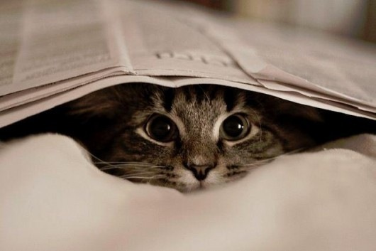 animals, cats, fun, hide and seek, kittens