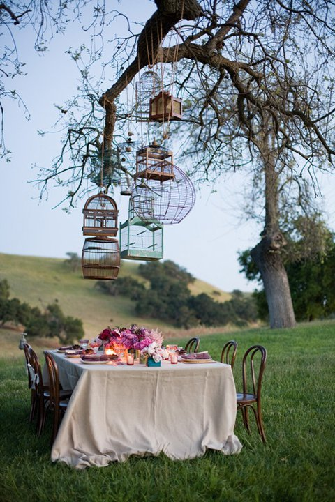 art, bird cage, cage, cages, food, nature, photography, scenery, table, tree