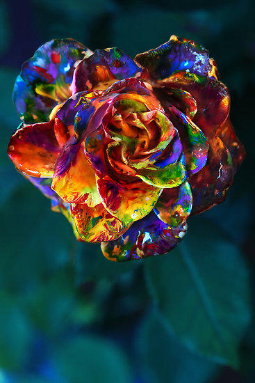 art, bright, colours, flower, paint, photography, rainbow, rose