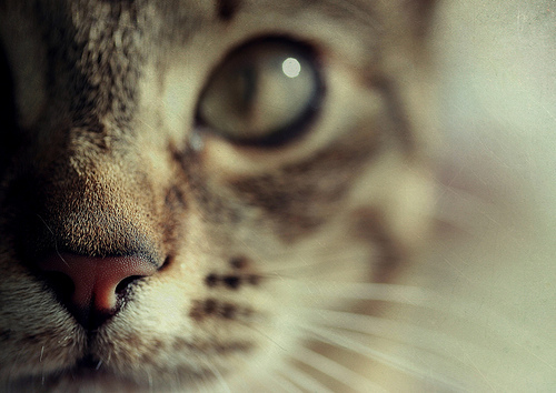 art, cat, cute, photography