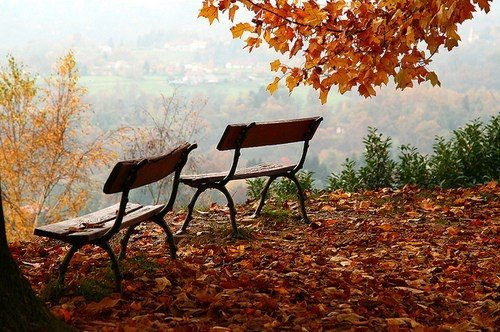 autumn, beautiful, beautifull, nature, photography