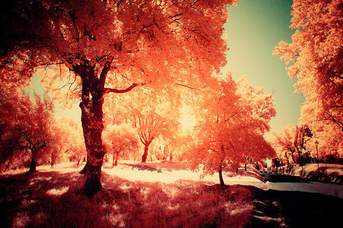 autumn, cute, magical orange, orange, sunset, sunshine