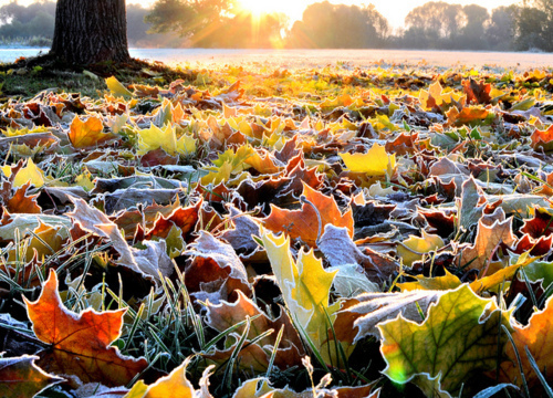 autumn, frost, ground, leaves, nature