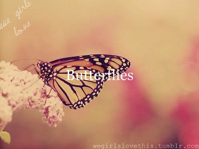 awesome, beautiful, butterflies, butterfly, dream