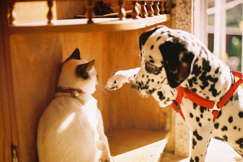 awesome, cat, cute, dalmata, day