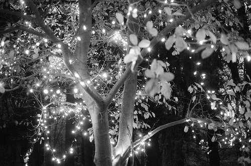 b&w, beautiful, black & white, black and white, cute, landscape, light, lights, lights tree, nature, photo, photography