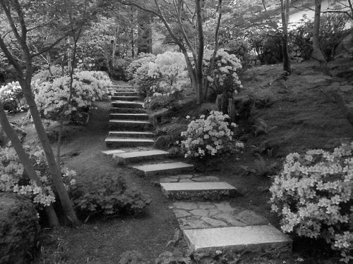 b&w, black & white, black and white, cute, garden