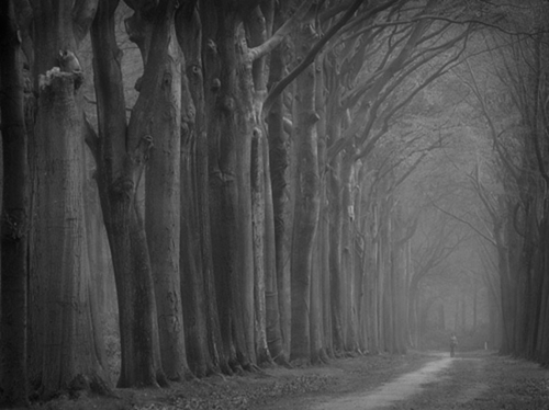 b&w, black & white, black and white, dark, darkness, forest, landscape, nature, photo, photography, place