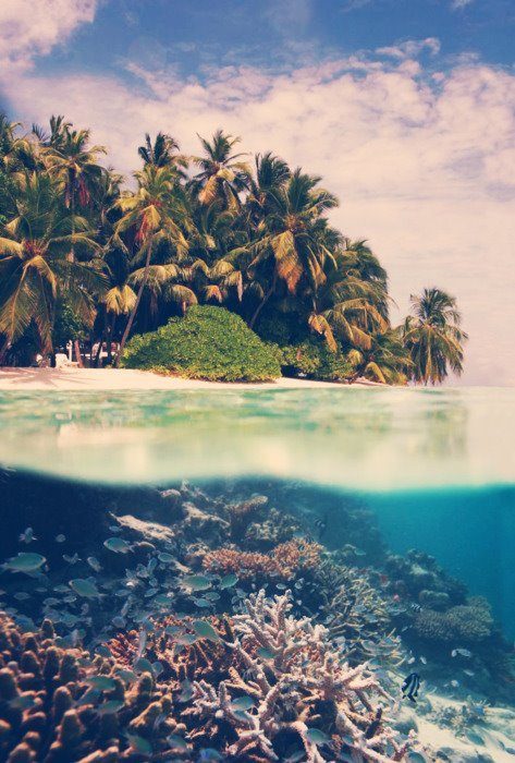 beach, blue, coral, green, hot, island, nature, ocean, palm trees, sea, sky, water