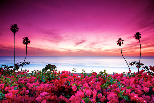 beach, blue, flowers, landscape, nature, ocean, palm trees, photography, pink, pretty, purple, scenery, sea, sky, sunset, trees, view
