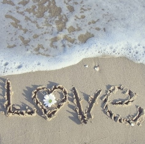 beach, couple, cute, flower, heart