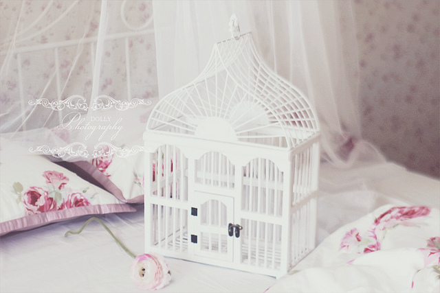 beautiful, bird cage, cute, dream, dreamy