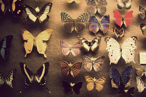 beautiful, black and white, blue, butterflies, photo, photography, pink