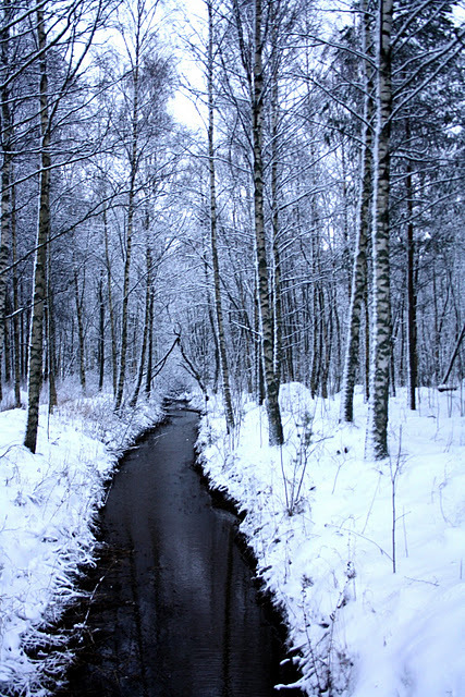 beautiful, black, cold, nature, photo, photography, pretty, snow, tree, trees, water, white, winter