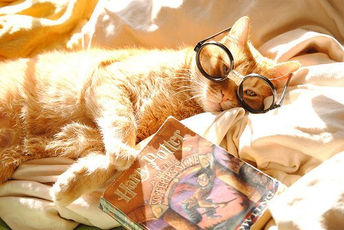 beautiful, book, cat, cute, harry potter