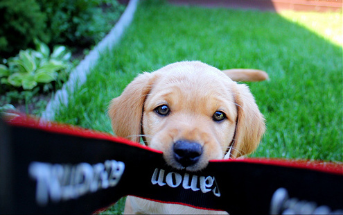 beautiful, cachorro, camera, canon, cute