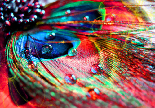 Beautiful, Colors, Feather, Girly, Heart