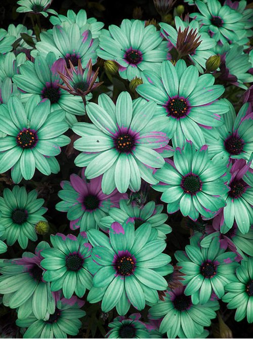 beautiful, cool, cute, flowers, green, photography, purple